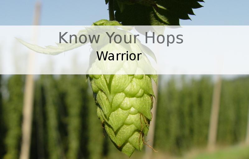 Know Your Hops - Warrior
