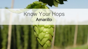 Amarillo – Know Your Hops